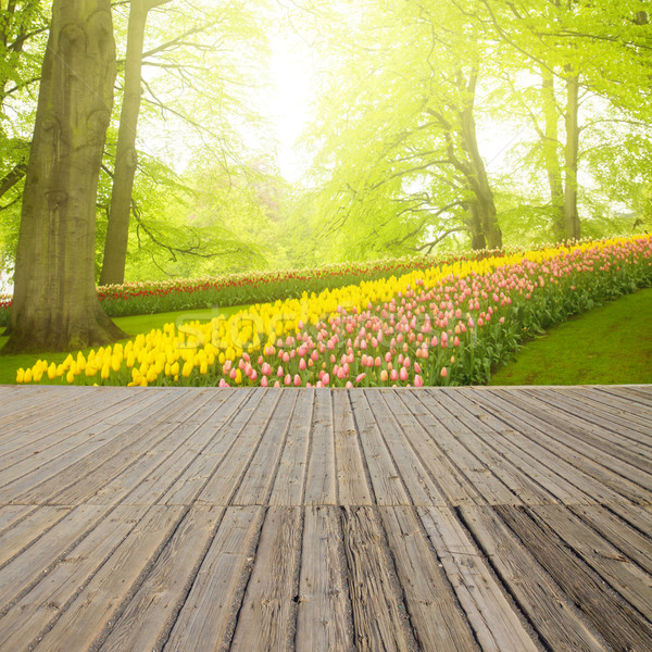 Blooming apple tree and wooden planks Stock photo © neirfy