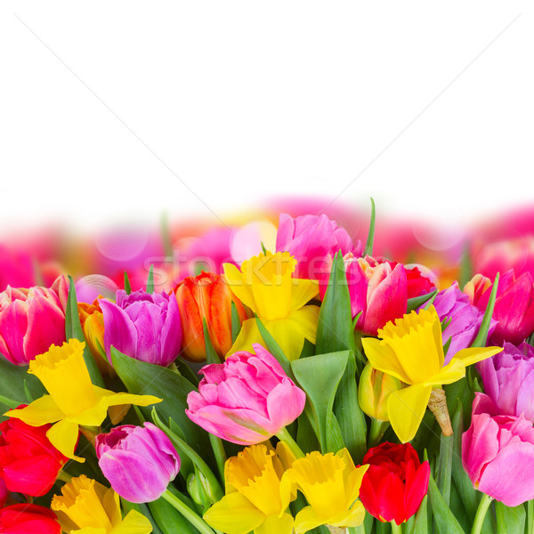Stock photo: bouquet of   tulips and daffodils