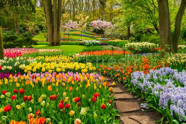 Hivatalos tavasz kert színes tulipánok kő Stock fotó © neirfy