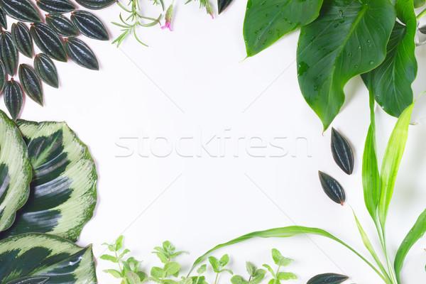 Taze yeşil yaprakları yeşil egzotik tropikal Stok fotoğraf © neirfy