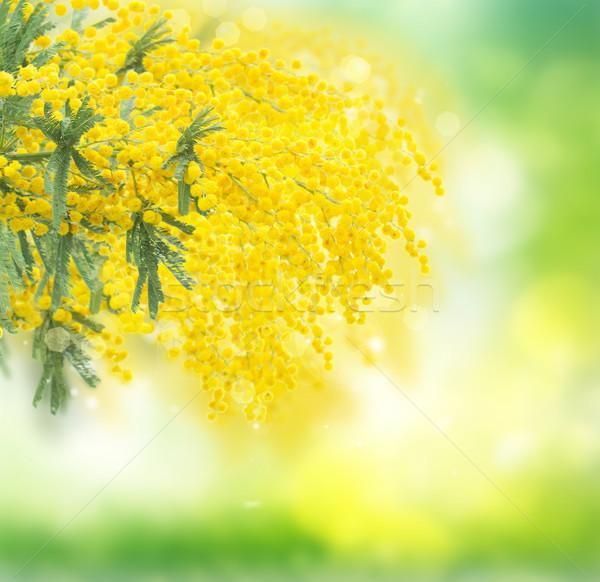 Franceza Flori Proaspăt Verde Grădină Primăvară