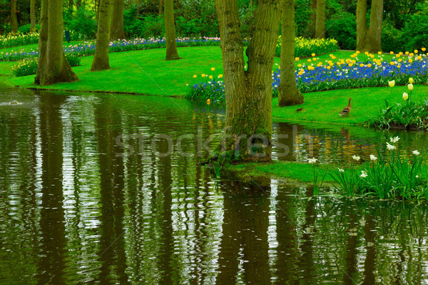 spring garden Keukenhof Stock photo © neirfy