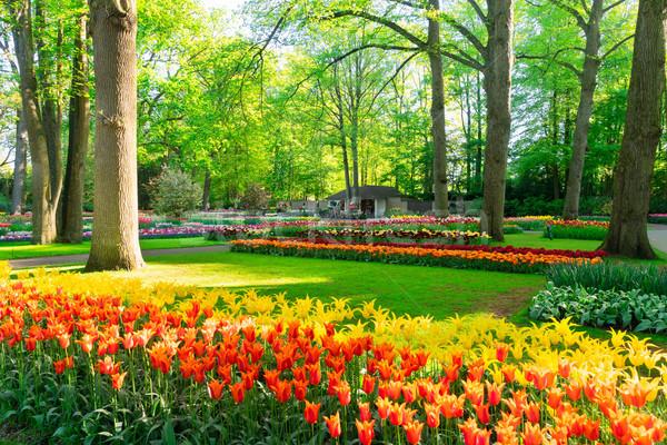 świeże trawnik kwiaty wiosną zielona trawa Zdjęcia stock © neirfy
