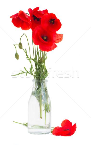 posy of poppy flowers Stock photo © neirfy