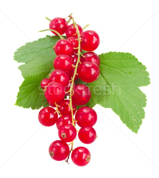 Taze kırmızı frenk üzümü yeşil yaprakları yalıtılmış beyaz Stok fotoğraf © neirfy