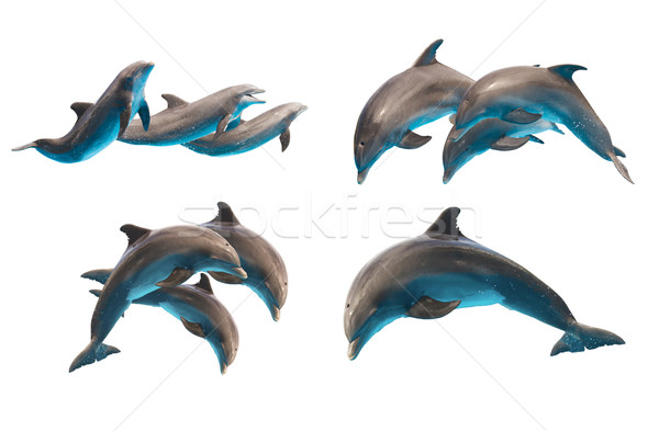 jumping dolphins on white Stock photo © neirfy