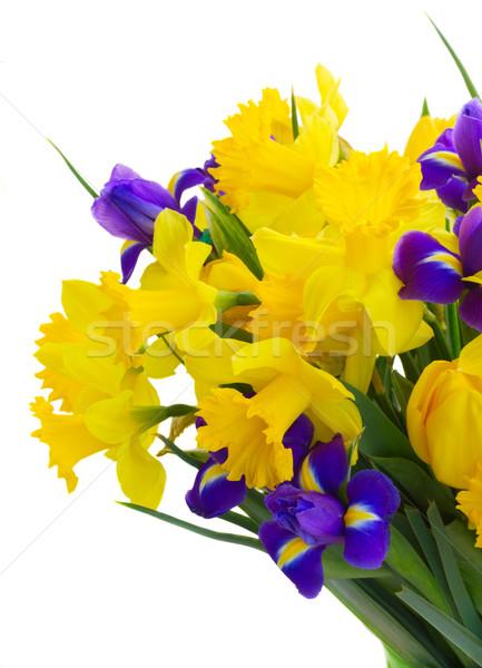 Stockfoto: Voorjaar · tulpen · bos · vers · Geel · narcissen