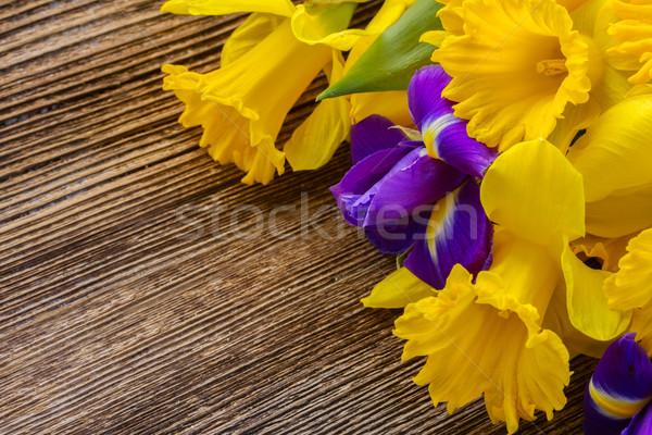 Pasen narcissen vers Geel Blauw bloem Stockfoto © neirfy