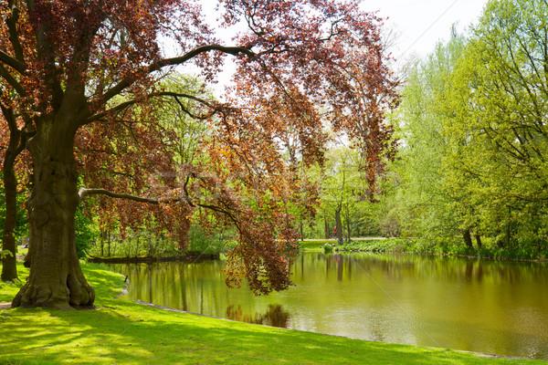 Park Amsterdam plaats holland water landschap Stockfoto © neirfy