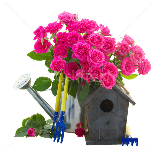 Rosa rosas gaiola gaiola isolado Foto stock © neirfy