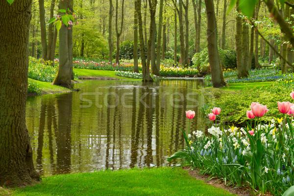 Voorjaar tuin Nederland kleurrijk rivier landschap Stockfoto © neirfy