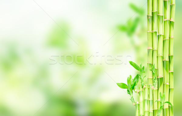 Verde bambù fresche foglie copia spazio bokeh Foto d'archivio © neirfy