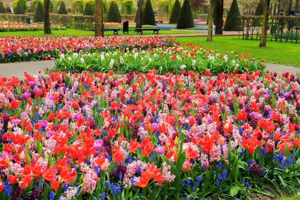 Formale primavera giardino colorato fiore Foto d'archivio © neirfy