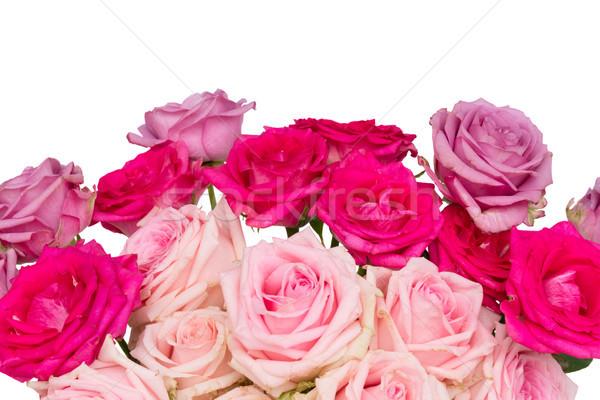 фиолетовый роз розовый свежие Сток-фото © neirfy