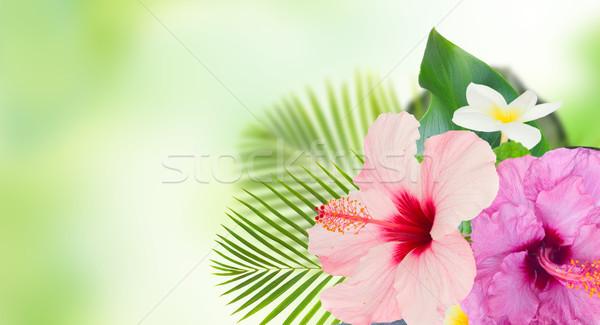 Stok fotoğraf: Turuncu · ebegümeci · çiçek · tropikal · çiçekler · yaprakları