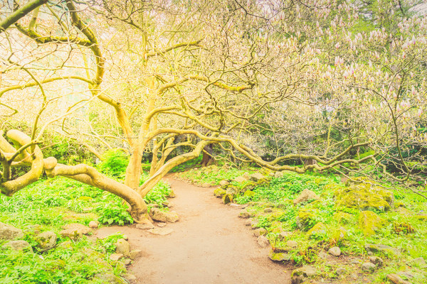 саду магнолия дерево весны пути способом Сток-фото © neirfy