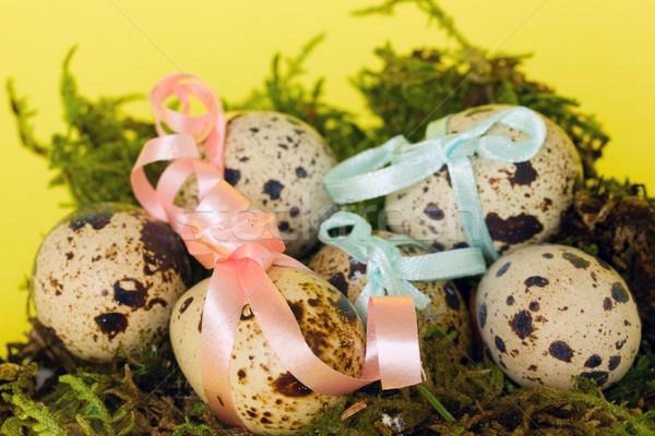 пасхальных яиц украшенный Пасху яйца зеленый гнезда Сток-фото © neirfy