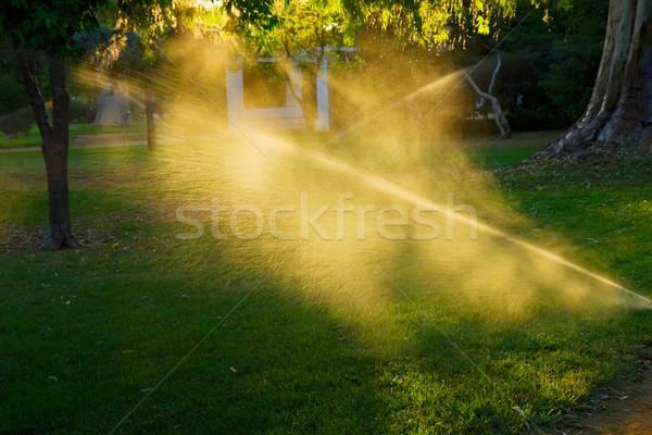 Aspersor automático hierba puesta de sol sol Foto stock © neirfy