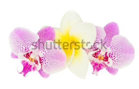 three orchid flowers Stock photo © neirfy