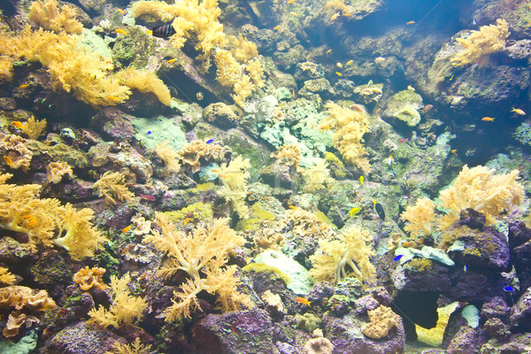тропические аквариум красочный воды бабочка Сток-фото © neirfy