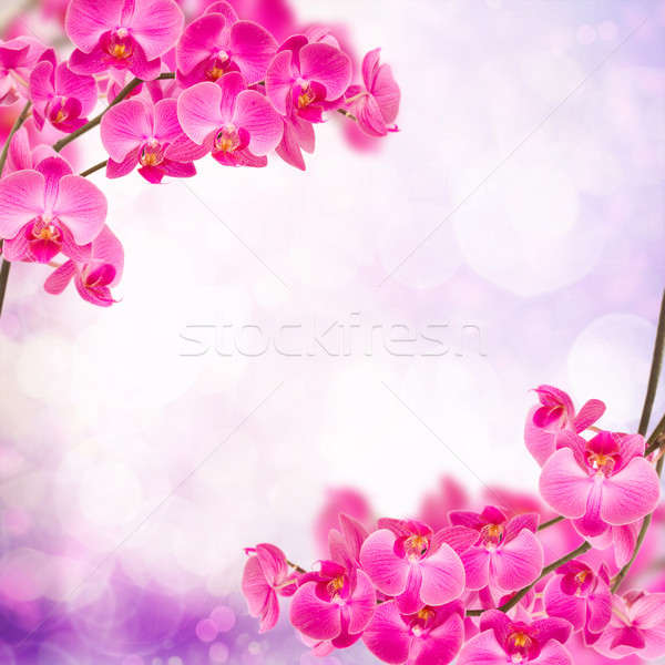 purple orchid branch frame Stock photo © neirfy
