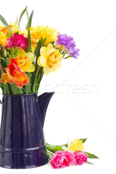 Abrótea flores azul pote Foto stock © neirfy