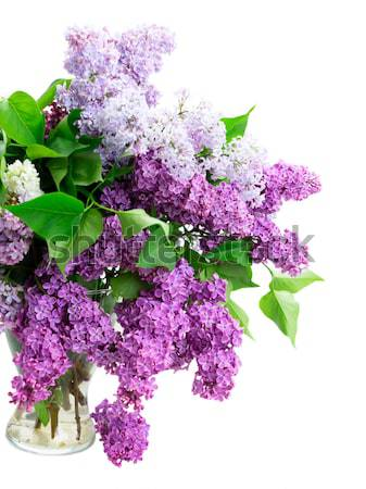Bunch of Lilac in jar close up Stock photo © neirfy
