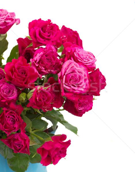 свежие розовато-лиловый роз небольшой Сток-фото © neirfy