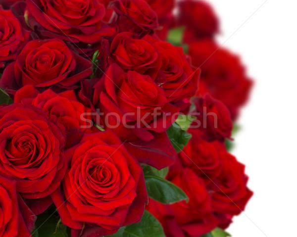 Bukiet ciemne red roses Wazon biały Zdjęcia stock © neirfy