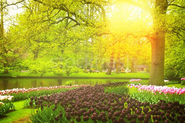 Voorjaar tuin holland kleurrijk gazon zwarte Stockfoto © neirfy
