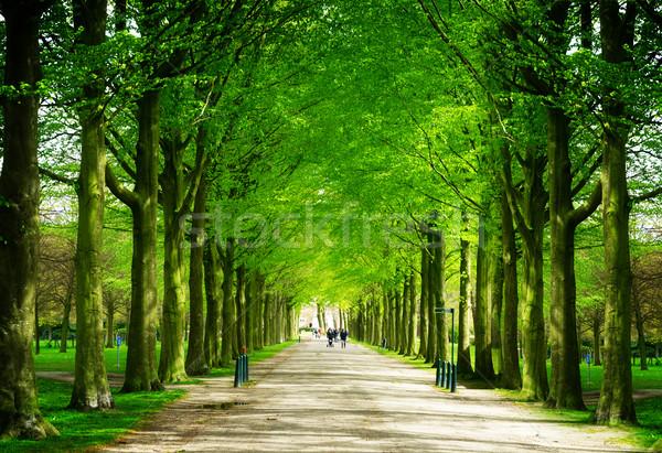 公園 オランダ 春 路地 レトロな 花 ストックフォト © neirfy