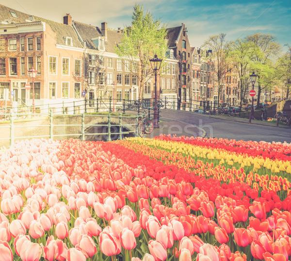 Maisons Pays-Bas canal fraîches tulipe Photo stock © neirfy