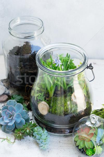 garden inside mason jar Stock photo © neirfy