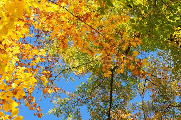 Dynamique automne feuillage jaune vert noix Photo stock © neirfy