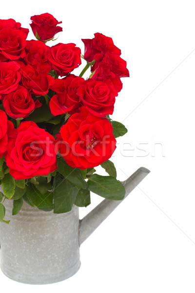 Buquê fresco rosas vermelhas regador rosas isolado Foto stock © neirfy