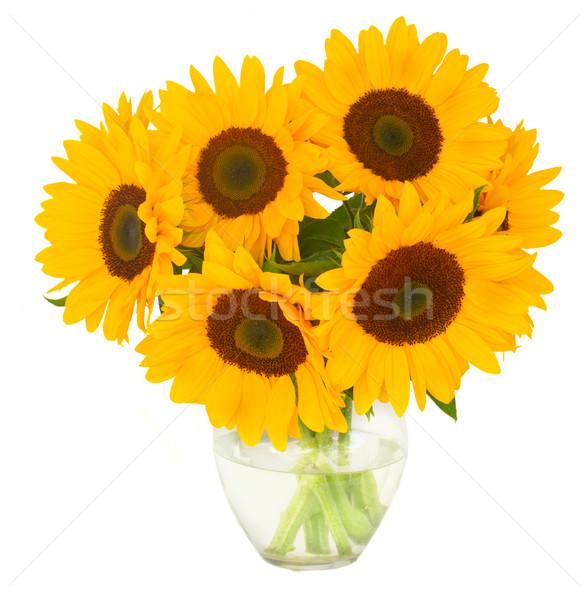 one bight sunflower Stock photo © neirfy