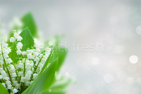 lilly of the valley flowers Stock photo © neirfy
