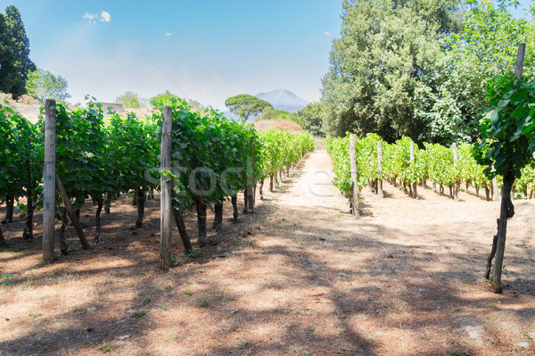 vineyard of Pompeii, Italy Stock photo © neirfy