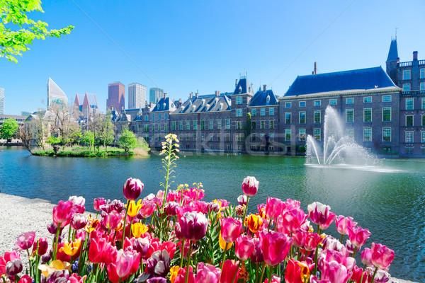 Holandés parlamento Holanda creciente tulipanes oficina Foto stock © neirfy