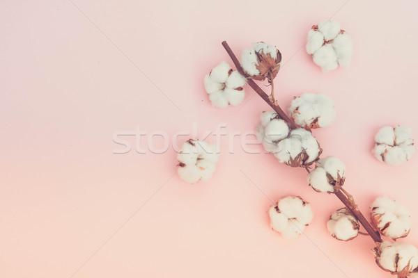 Crudo algodón rama rosa espacio de la copia Foto stock © neirfy