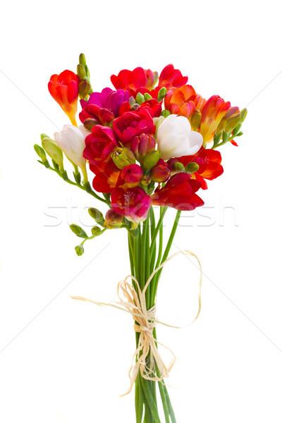 posy of red freesia flowers Stock photo © neirfy