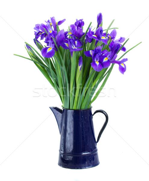Albastru ghiveci de flori izolat alb floare natură Imagine de stoc © neirfy