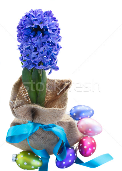 blue hyacinth flowers with easter eggs Stock photo © neirfy