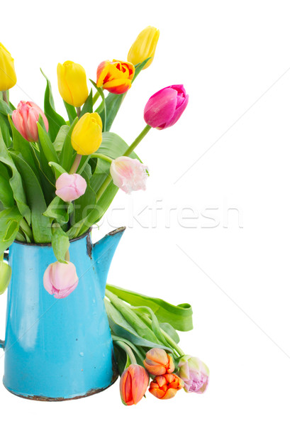 Stock photo: bouquet of multicolored   tulip flowers in blue pot