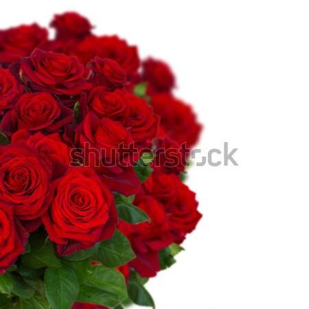 Buket karanlık kırmızı gül vazo beyaz Stok fotoğraf © neirfy