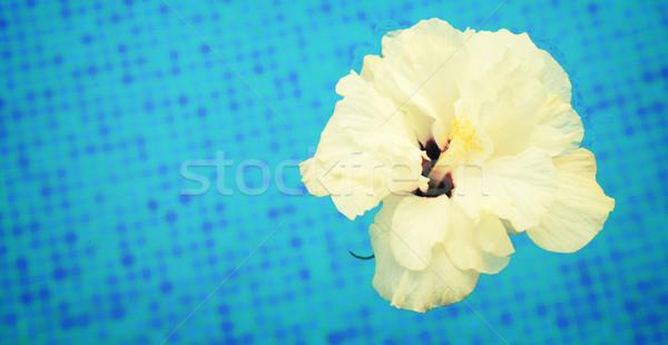 Ebegümeci serin su beyaz kiremitli havuz Stok fotoğraf © neirfy