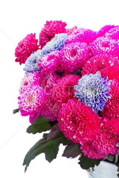 Blauw chrysant bloemen boeket roze Stockfoto © neirfy