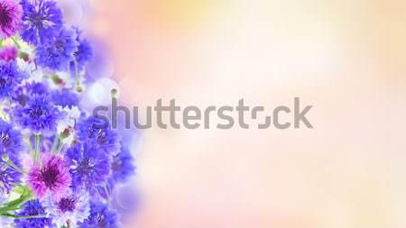 Niebieski różowy streszczenie banner kwiat charakter Zdjęcia stock © neirfy