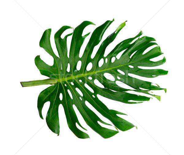 fresh green leaf Stock photo © neirfy