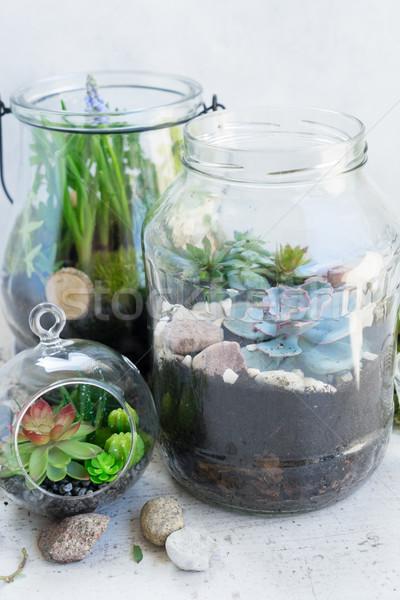 Kert bent kőműves bögre üveg növényzet Stock fotó © neirfy